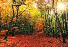 Prepara tu cuerpo para el otoño