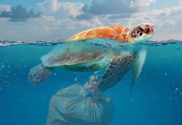 residuos no biodegradables