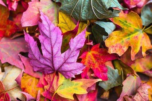prepararse para el otoño