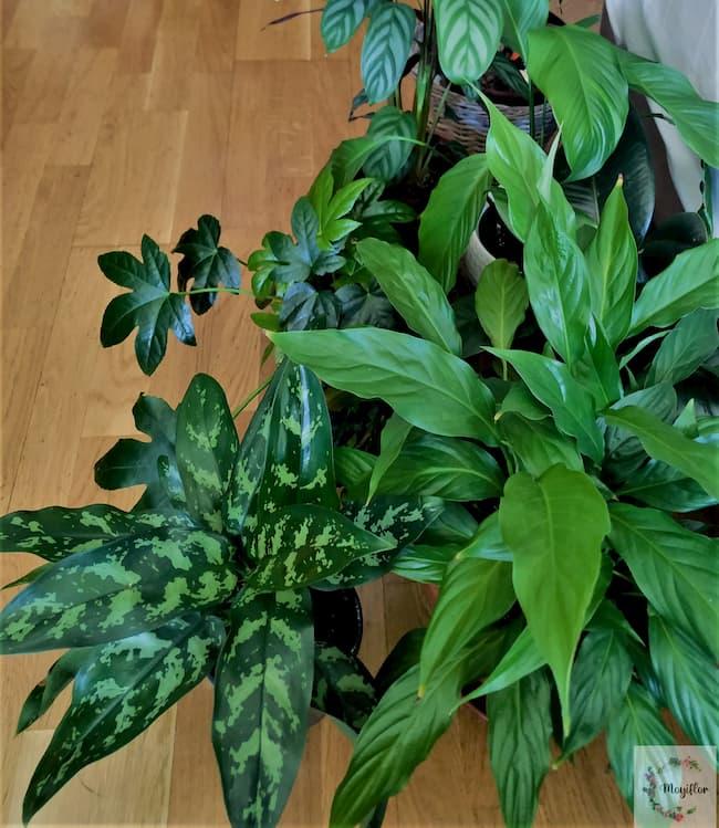 Moyiflor, plantas para principiantes
