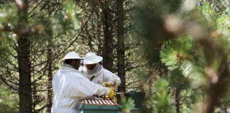 curiosidades de la miel, miel muria