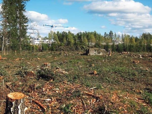 Ley de deforestación urgente