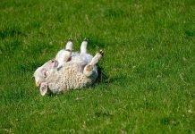 El avance de la ganadería industrial