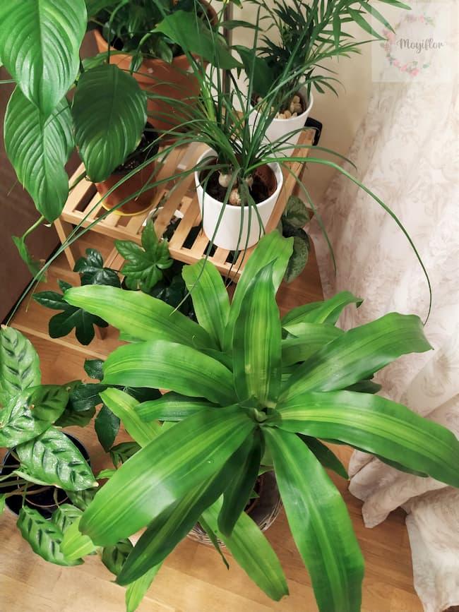 Remansos de paz con plantas