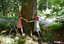 Beneficios de abrazar árboles