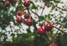 6 frutas de primavera y sus beneficios