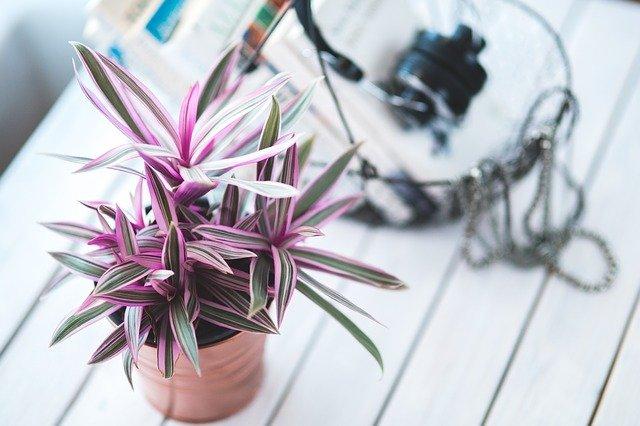 Plantas que no necesitan luz